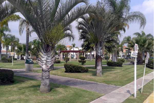 jardin real zapopan - areas verdes